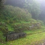 Wild ginger covers many hillsides