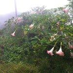 Wildflowers along roadside