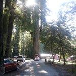 Long shot of tree