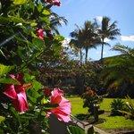 Manicured Grounds - beautiful plumerias