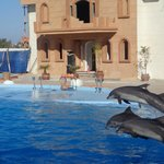 Dolphin Show