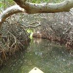 een ruime doorgang door de mangroves