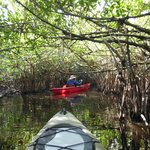 Paddling down the mangrove highway