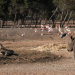 At the open Savanah - Rhino & Flamingo
