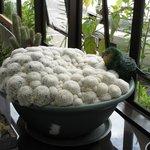 lobby cactus