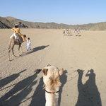 Escursione organizzata dal resort tramite t.o. : sul cammello nel deserto