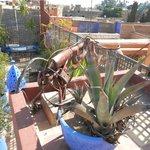 La terrasse donnant sur les toits de Marrakech