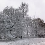 The trees in the garden in the snow