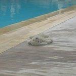 Bain de soleil pour ours en peluche