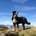 "Haushund ""Leo"" am Kellerjoch - our dog ""Leo"" at the Kellerjoch"