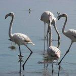 Flamingoes at a nearby soda lake