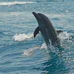 Dolphin in Golfo Dulce