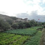 Cultivos Amurallados