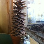 Sugar pine cone - table decor