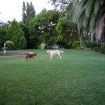 Teil des Gartens & Hunde
