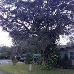 Great Tree's