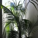 Nice plant at outer corridor of apartment lift lobby.