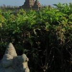 Blick zum Tempel vom Garten aus