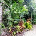 wonderful plant life