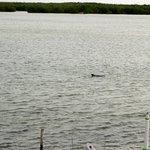 des dauphins devant l'hôtel