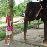 Покормить слона - милое дело!