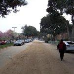 Calle lateral al Museo, encontrarás bellos ejemplares de plantas, flores, orquideas etc, etc