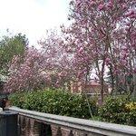 Calle lateral al Museo, encontrarás bellos ejemplares de plantas, flores, orquideas etc,