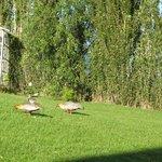 bird-watching in the backyard