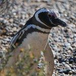 First penguin encounter