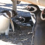 Penguins in the shade under the stairs