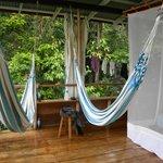 my hammocks
