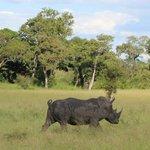 Rhino on Game Drive
