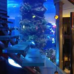 Salt water acquarium in the lobby