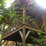 Typical Tree House