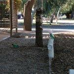 Photo de Alice Springs Tourist Park