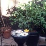 Foliage on the patio