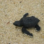 Baby Turtle we helped rescue