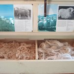 Sheep Info