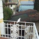 Vista Balconcino, si era appena appoggiata una colomba