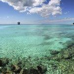 Eleuthera reef shot