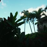 Everyone should wake up to palm trees their first morning in Hawai'i.