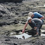 Checking out the tide pools