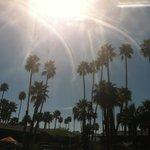 palm trees skyline