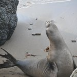 Listen to the elephant seals telling their own story