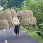Erlebnisse und um Villa Orchid Bali