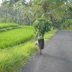 Erlebnisse rund um Villa Orchid Bali