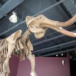 Mammoth skeleton found in Kenosha