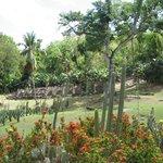 Habitation Latouche : jardin