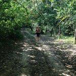 Shady Lane Hike