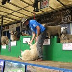 Learn how to shear sheep at Masham 'Sheep Fair'. A wonderful event every September.